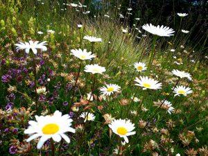 Blumenwiese Bodenalm